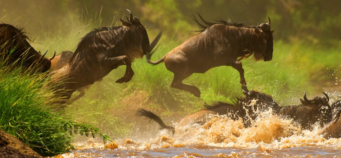 africa wildlife game safari, africa safari destinations, africa wildlife safari, africa's big five safari, african safari holiday