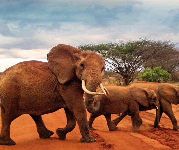 3 Days Tsavo West Tsavo East Park Safari Holiday4