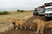 Kenya Camping Safari Adventure