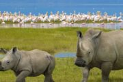 Lake Nakuru Adventure Safari