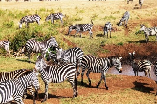 10 Days Kenya Tanzania Adventure Safari Vacations