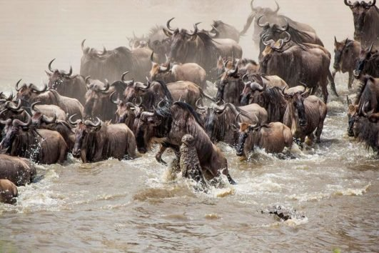 6 Days Masai Mara Migration Wildebeest Adventures