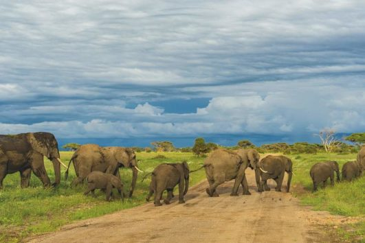 3 Days Tsavo West Tsavo East Park Safari Holiday5