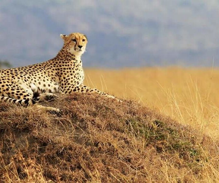 4 Days Masai Mara Camping Tours5