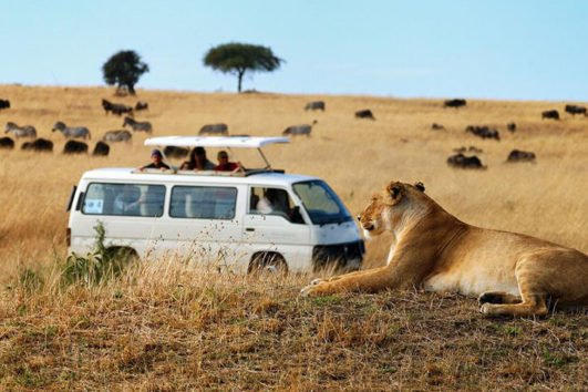 Safari Deals and Discounts