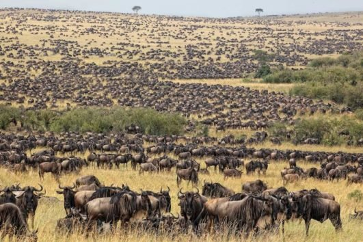 5 Days Masai Mara Wildebeest Migration Safari