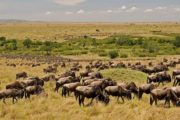 6 Days Masai Mara Wildebeest Migration Safari Holiday