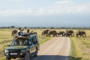 7 Days Masai Mara Photographic Safari Adventure