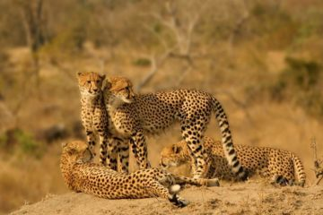 6 Days Kenya Wildlife Adventure Safari Holiday
