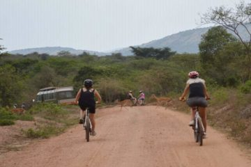 "7 Days Kenya Cycling Tour Adventure is a gentle sightseeing ride with plenty of stops and sights that gives you an insight in the local life. 7 Days Kenya Cycling Tour Adventure takes you to less paved roads and spectacular scenery combined with ""secret"" jungle trails make this Biking Safari Adventures tour an adventurous."