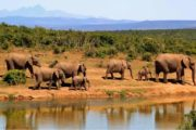 7 Days Kenya Safari Holiday Adventure Package