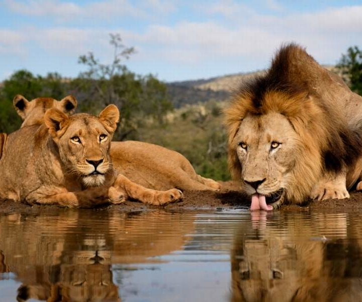 8 Days Africa Wildlife Photographic Tour Safari