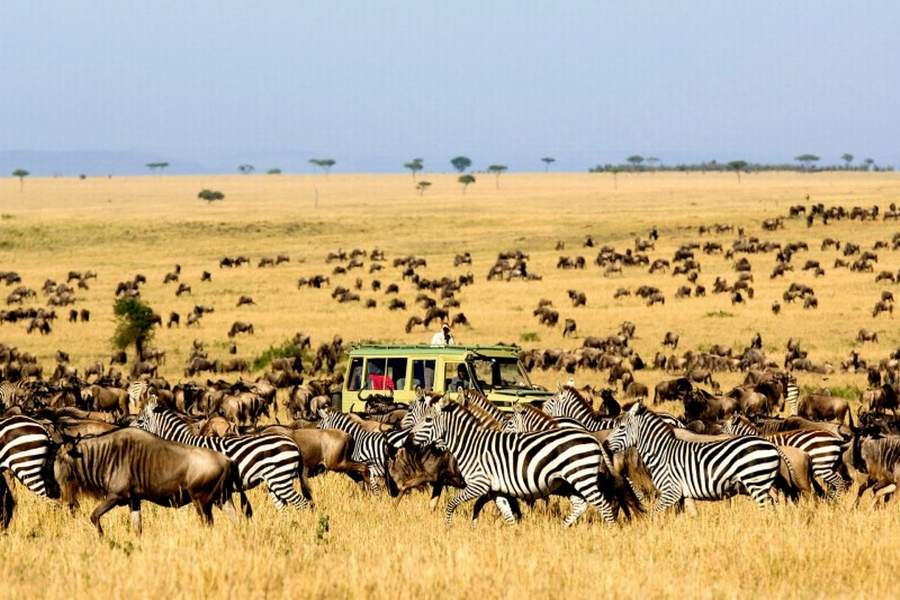 7 Day Masai Mara Wildebeest Migration Safari Adventure