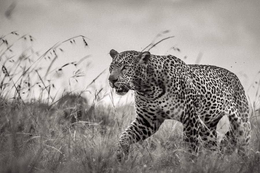 10 Days Africa Photographic Safari Package