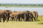 10 Days Honeymoon Africa Holiday Safari