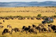 10 Days Kenya Tanzania Africa Safari Adventure