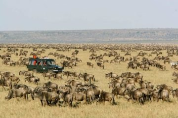 10 Days Wildebeest Migration Safari Package