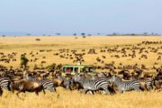 10 Days Kenya Tanzania Migration Tour Adventure