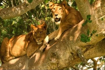 11 Day Kenya Wildlife & Beach Holiday Safari