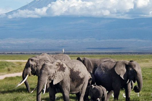 11 Days Kenya Tanzania Adventure Safari Holiday