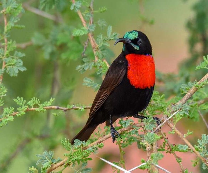 12 Days Africa Bird Watching Safari