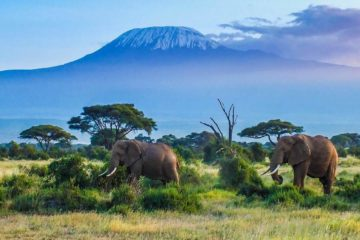 12 Days Kenya Tanzania Wildlife Adventure Safari