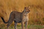 12 Days Kenya wildlife Photographic Safari