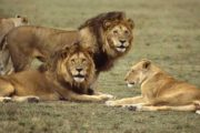 15 Days Africa Guided Photographic Safari Package