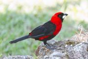 15 Days Kenya Birding Safari Adventures