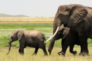 3 Days Amboseli Camping Safari Holiday Tours