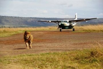 3 Days Masai Mara Flying Safari Package