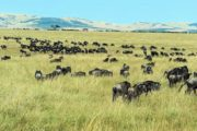 3 Days Ngorongoro Serengeti Camping Tour