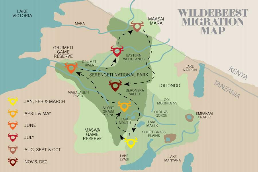 4 Days Masai Mara Migration Safari