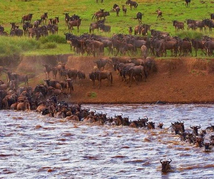 5 Days Masai Mara Wildebeest Migration Safaris