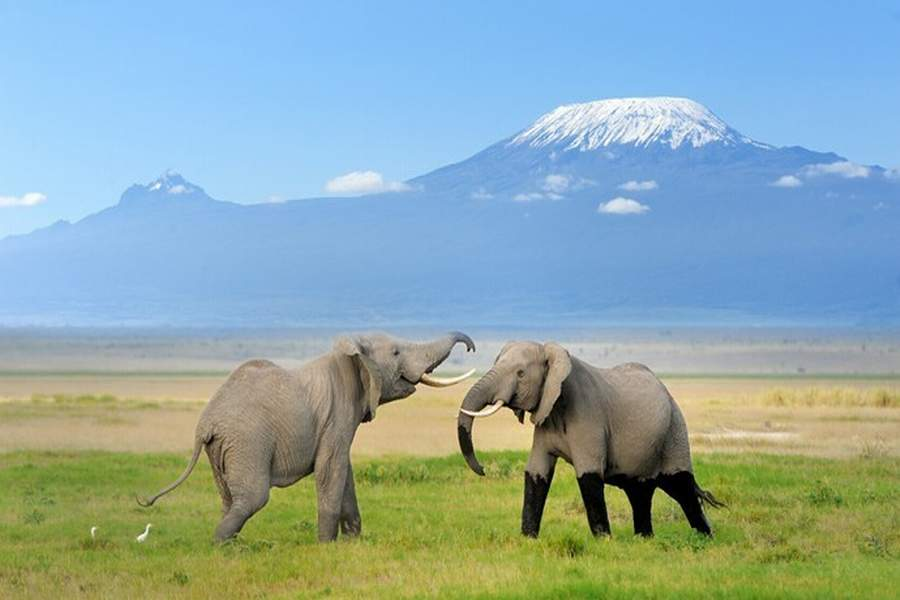14 Days Kenya Tanzania Safari Tour Adventure