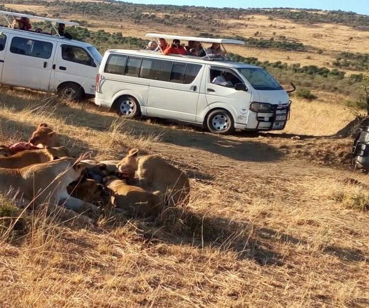 6 Days Budget Tented Camping Safari Holiday