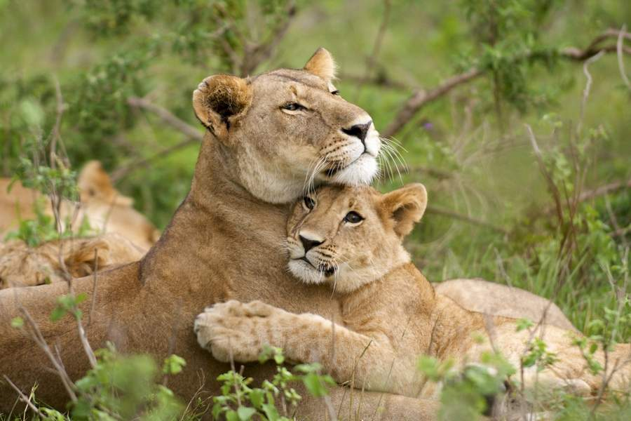 6 Days Kenya Holidays Vacation Safari Package