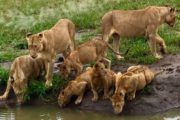 6 Days Masai Mara Safari Camping Adventure