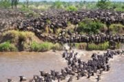 6 Days Serengeti Wildebeest Migration Safari Adventure