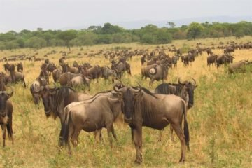 6 Days Wildebeest Migration Luxury Safari Adventure