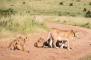 7 Day Tanzania Lodge Safari Holiday