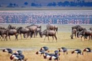 8 Day Tanzania Lodge Safaris Holiday
