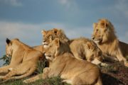 8 Days Kenya Tented Camping Adventure Safaris