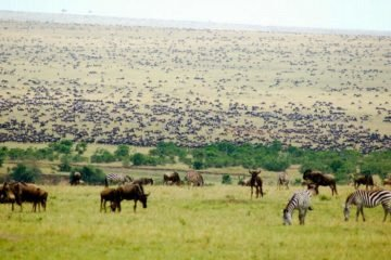 8 Days Serengeti Wildebeest Migration Safari