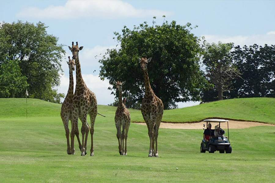 9 Days Kenya Golf Wildlife Tour l Kenya Golf Holiday Safaris