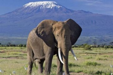 9 Days Tanzania Photo Safari Adventure Package