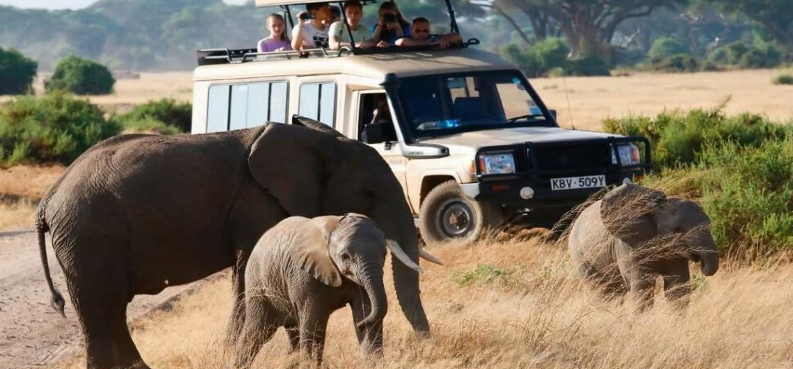 Africa Guided Wildlife Safari Holiday