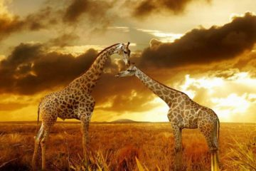Africa Photographic Safaris Package