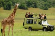 13 Days Kenya Tanzania Wildlife Lodge Safari