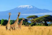 13 Days Kenya Tanzania luxury Safari Holiday